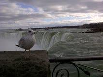 Gulls in Canada Stock Photo