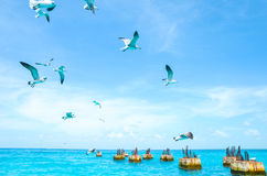 Gulls circling over the sea in search of food on a background of sea and blue sky. Sea birds in flight in search of feed Stock Photos