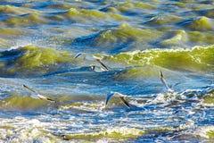 Gulls cormorants fly over raging blue sea, storm background Stock Photo