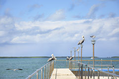 Gulls and cormorants sitting on a pier near the sea Royalty Free Stock Photos