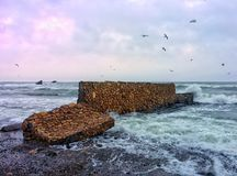 Gulls, decorative plate and raging sea Stock Photos