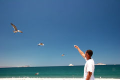 Gulls eating. Guy with fish in hes hand stock photos