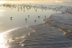 Gulls in Essaouira. At sunrise Stock Image