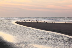 Gulls in evening light at Ameland beach, Holland Stock Images