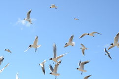 Gulls Royalty Free Stock Photography