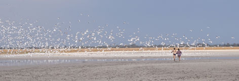 Gulls fly away from the lake. Gulls fly away from the dried lake Stock Photos