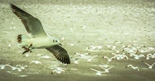 Gulls flying Royalty Free Stock Photo