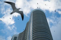 Gulls flying near skyscraper in Miami USA. Lots of gulls flying in the blue sky passing by huge semicircular building in Miami USA Royalty Free Stock Photo