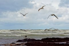 Gulls flying over the Baltic sea on a cloudy day, Latvia. Gulls flying over the Baltic sea on a cloudy day near the coast of Liepaja, Latvia Royalty Free Stock Photo