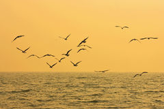 Gulls flying. On the sea Royalty Free Stock Images
