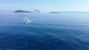 Gulls. Flying sea Royalty Free Stock Images