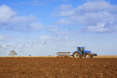Gulls following Tractor Ploughing Field Royalty Free Stock Images