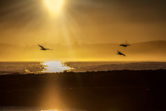 3 gulls. Golden sunrise in Kaikoura, New Zealand with three seagulls flying across the beach Royalty Free Stock Photo