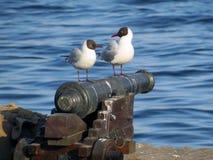 Gulls on guns Royalty Free Stock Photo