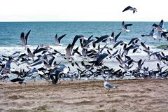 Gulls have been observed preying on live whales, landing on the whale as it surfaces to peck out pieces of flesh