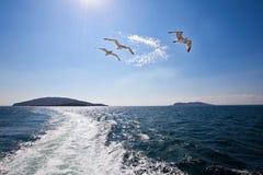 Gulls on the Island Stock Photos