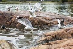 Gulls at the lake. Stock Image