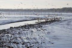 Gulls Stock Images