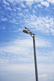 Gulls & Lamp Post, Gulf Coast Royalty Free Stock Image