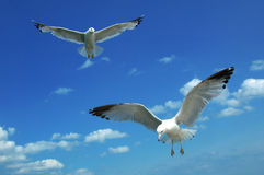 Free Gulls Looking Down Stock Photo - 103780