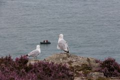Gulls looking at fishermen Ireland royalty free stock photography