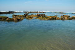 Gulls on low tide. Portuguese coastline Royalty Free Stock Images