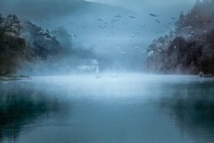 Gulls in the Mist on Tranquil Morning stock photo