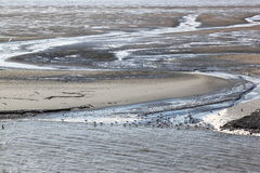 Gulls upon mudflats of Waddenzee, Holland Royalty Free Stock Photography