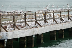 Gulls nest on the pier Stock Image