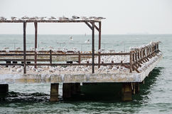Gulls nest on the pier Royalty Free Stock Photo