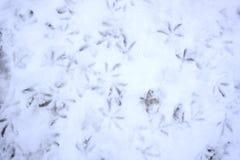 Gulls os pés - pegadas dos pássaros na neve fotografia de stock royalty free