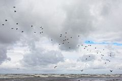 Flock of birds flying over the waves of the baltic sea, Latvia Stock Photo