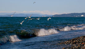 Gulls over the sea Royalty Free Stock Photography