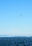 Gulls Over Straits of Juan de Fuca Stock Photos
