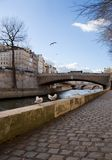 Gulls in Paris. Le pont de la Tournelle over the Seine river - Paris, France royalty free stock images