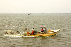 Gulls and pelicans mob crabbers checking their pots in North Car Stock Photography
