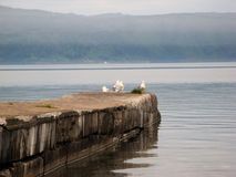 Gulls on pier of lake. Seagulls on the concrete pier of Lake Baikal in foggy weather stock images