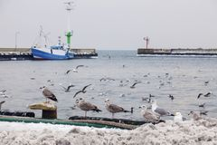 Port of Hel. Gulls in the port of Hel. Hel, Pomerania, Poland Stock Photography