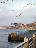 Gulls in the port of Istanbul. Turkey Royalty Free Stock Photography