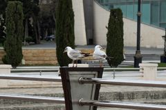 Gulls on the railing of the waterfront on the background of the trees, houses stock photo