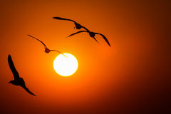 Gulls in the rays of the sunset Royalty Free Stock Photo