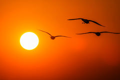 Gulls in the rays of the sunset Royalty Free Stock Photography