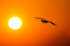 Gulls in the rays of the sunset Royalty Free Stock Photos