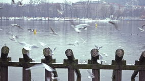 Gulls on the river stock footage