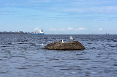 Gulls on rock, on water of the Gulf, ship island. Seagulls on a rock, Gulf of Finland, the ship, the island of Kotlin Royalty Free Stock Photos