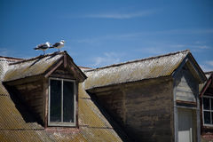 Gulls on the roof Royalty Free Stock Photography