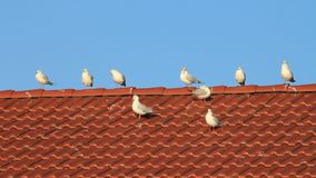 Gulls on roof, background blue sky, copy space stock video footage