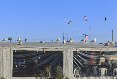 Gulls on the roof of the fish cafe in Istanbul Royalty Free Stock Image