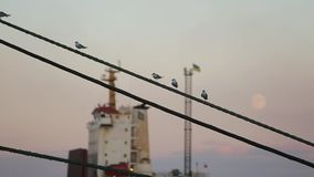 Gulls on the rope in harbor with cargo ship, waving flag and moon on background. Seagulls sit on cord at seaport in the stock video