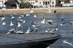 Gulls on the run Royalty Free Stock Photo